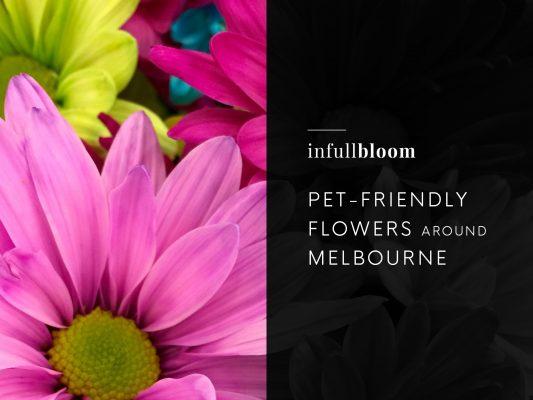 Pet-Friendly Flowers Around Melbourne