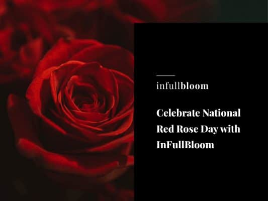 Celebrate National Red Rose Day with InFullBloom
