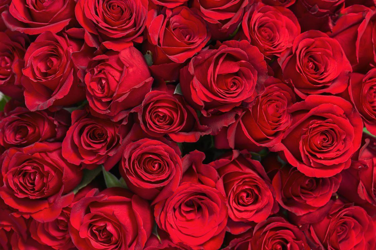 Florist Middle Park